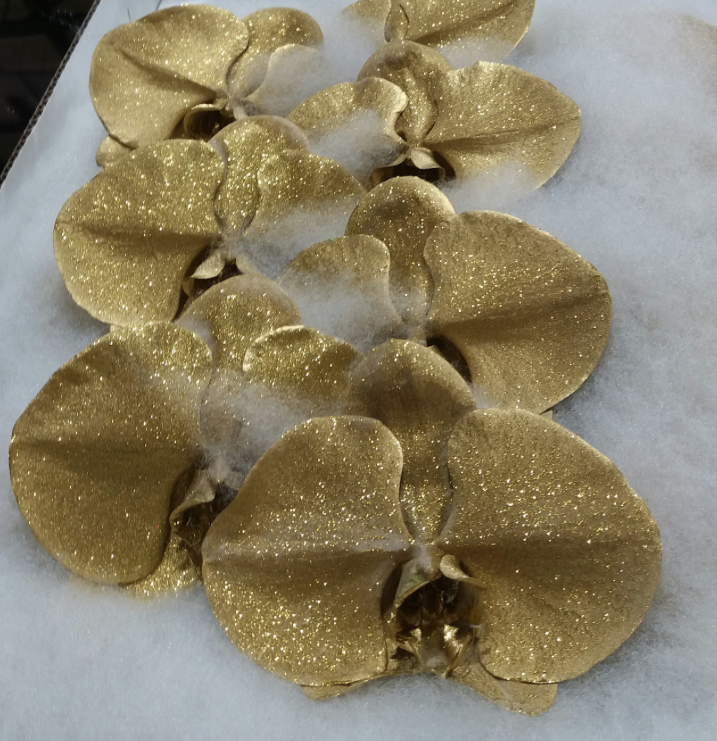 Phalaenopsis Gold cut stems