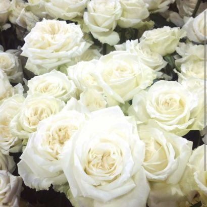 perfect white rose buckets