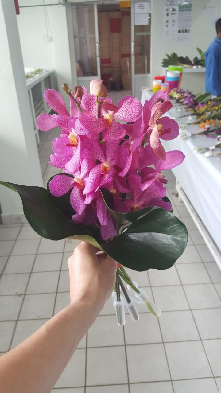 Posy vanda orchids with heart leaves