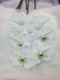 Phalaenopsis Baby Blue cut stems